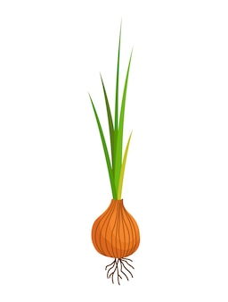 Vegetais de cebola crescendo. planta apresentando estrutura radicular. produto agrícola para menu de restaurante ou rótulo de mercado. alimentos orgânicos e saudáveis