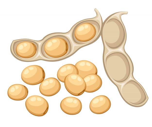 Vegetais de soja inteiros e frescos da ilustração de vagem de feijão aberto de alimentos orgânicos de jardim na página do site e aplicativo móvel com fundo branco
