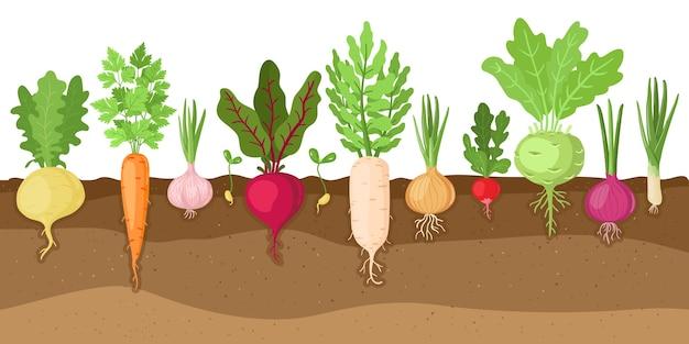 Vegetais plantados em design plano