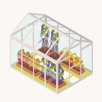 Vegetais que crescem em caixas com solo dentro da estufa de vidro.