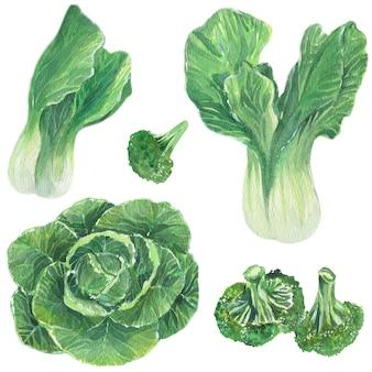 Vegetais verdes. repolho, brócolis e salada. ilustração em aquarela. elementos isolados do vetor.