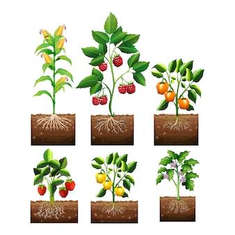 Vegetal e desenhos de frutas coleção