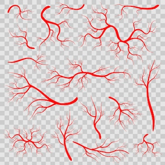 Veias vermelhas, vasos humanos, artérias sanitárias.