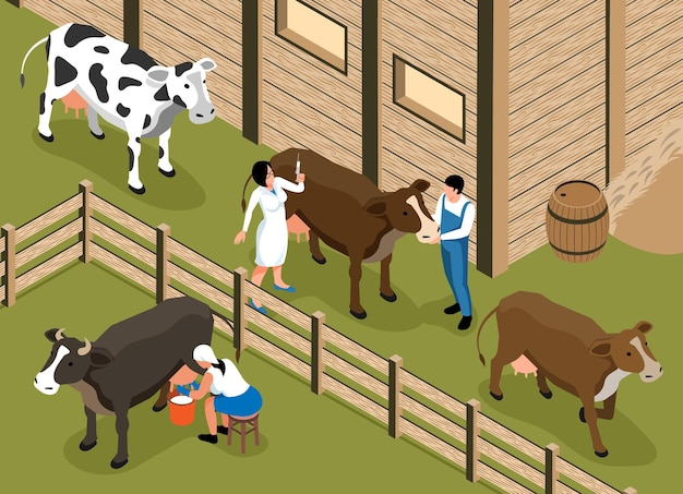 Veterinário de gado visita a composição isométrica de uma fazenda de gado leiteiro familiar com uma mulher ordenhando vaca na ilustração do paddock