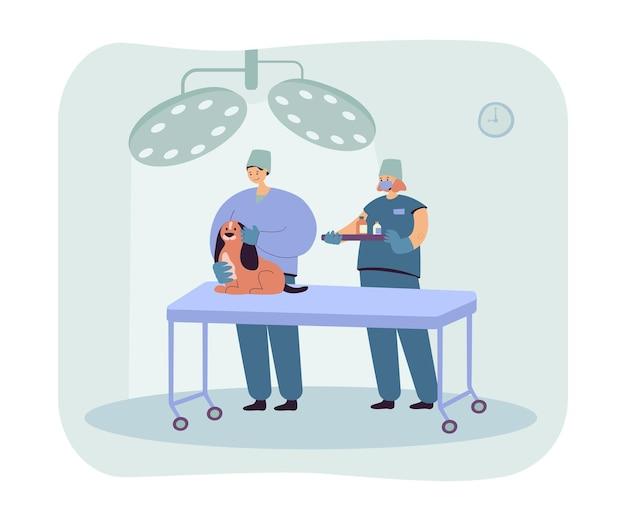 Veterinários examinando cachorro e dando remédio