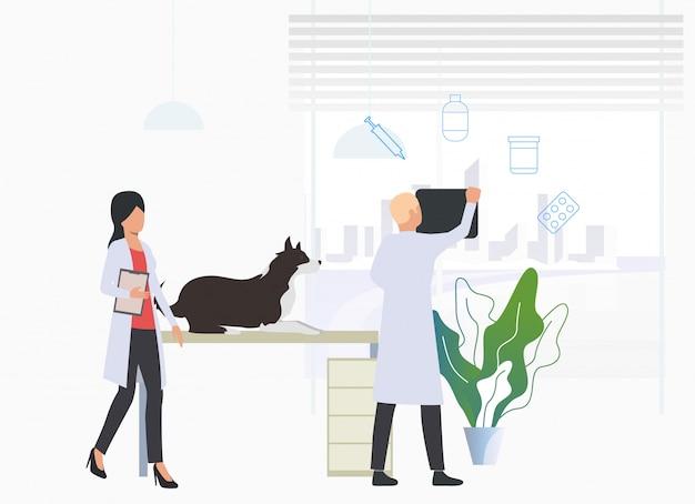 Veterinários que examinam o cão na clínica veterinária