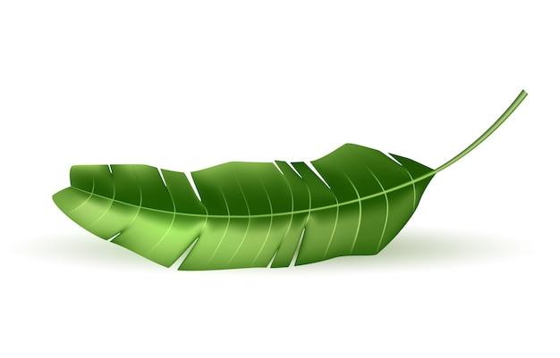 Vetor 3d férias de folha de palmeira tropical exóticas