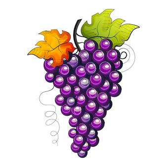 Vetor aquarela frutas uvas ramo em fundo branco