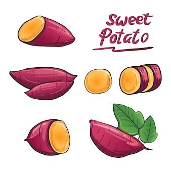 Vetor da ilustração da batata doce na cor da raiz roxa.