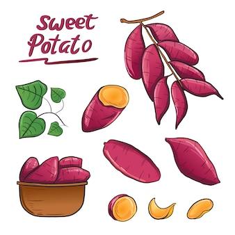 Vetor da ilustração da planta da raiz da batata doce na cesta.