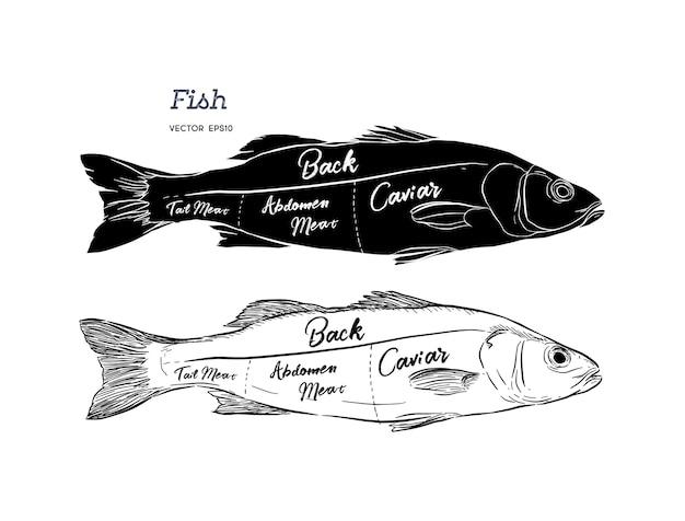 Vetor da rotulação do esquema do corte dos peixes do cartaz.