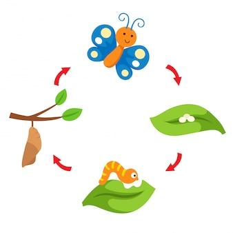 Vetor de borboleta de ciclo de vida de ilustração