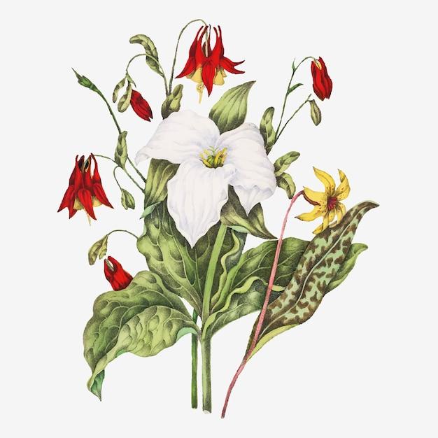 Vetor de buquê de flores de língua amarela, trílio branco grande e columbina selvagem