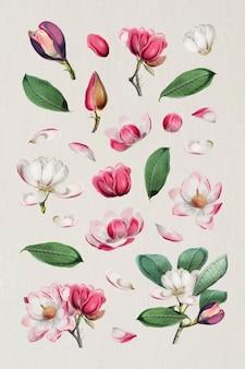 Vetor de coleção de design floral elegante