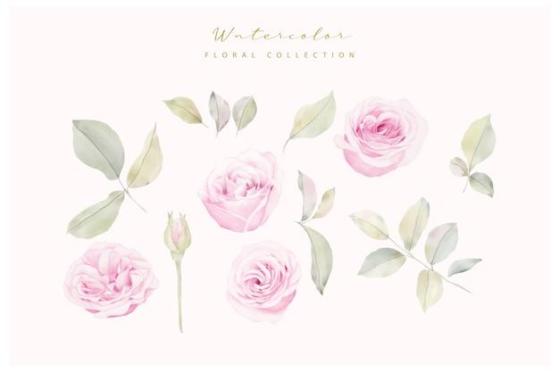 Vetor de coleção de flores de rosas em aquarela
