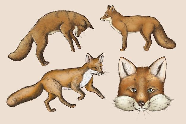 Vetor de coleção desenho vintage raposa marrom peluda