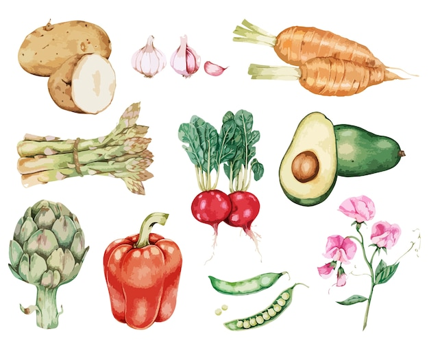 Vetor de coleção vegetal desenhada de mão