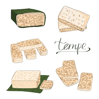 Vetor de comida tempeh ou tempe