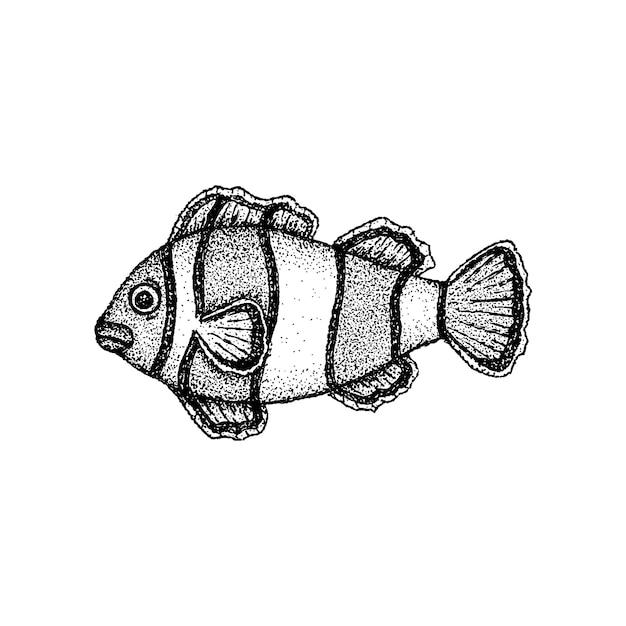 Vetor de dotwork de palhaço de peixe. handdrawn sketch ilustração de tatuagem.