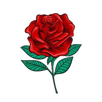 Vetor de flor rosa