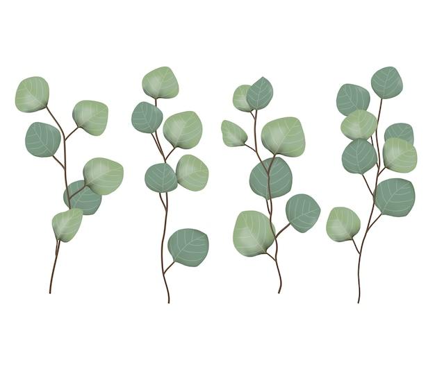 Vetor de folhas de eucalipto