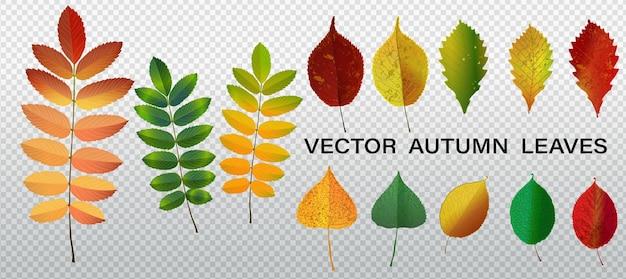Vetor de giro definido com folhas amarelas e laranja. conjunto de folhas de outono. folha de carvalho, folhas caídas