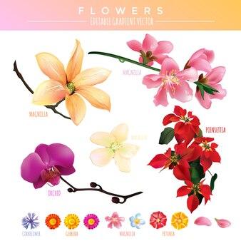 Vetor de gradiente de flores