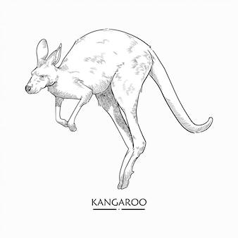 Vetor de ilustração de canguru