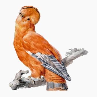 Vetor de ilustração de pássaros exóticos, remixado de obras de aert schouman Vetor grátis
