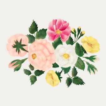 Vetor de ilustração vintage de rosas de junho
