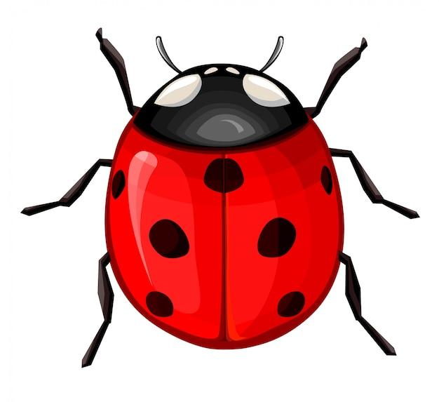 Vetor de joaninha vermelha, pequeno besouro com as costas abobadadas