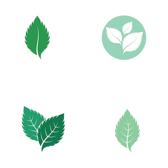 Vetor de logotipo de natureza fresca de folha de hortelã