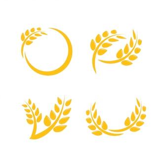 Vetor de modelo de design gráfico de agricultura de trigo