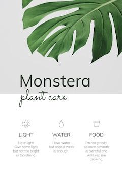 Vetor de modelo de planta de casa monstera plant care