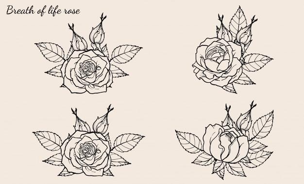 Vetor de ornamento rosa definido pelo desenho de mão
