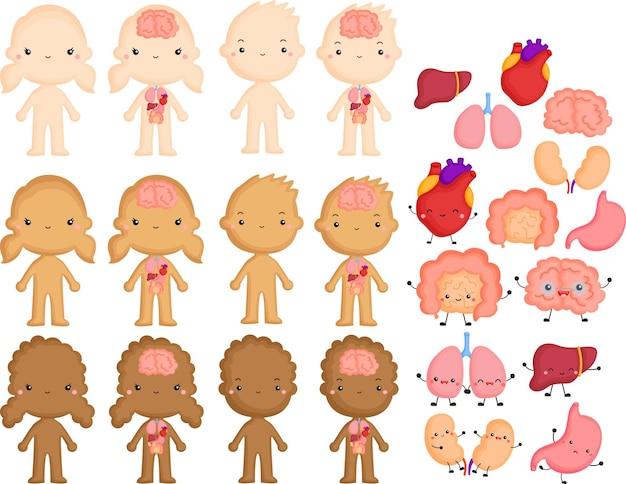 Vetor de partes internas do corpo humano
