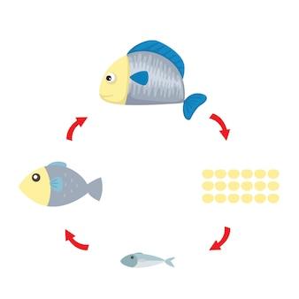Vetor de peixes de ciclo de vida de ilustração