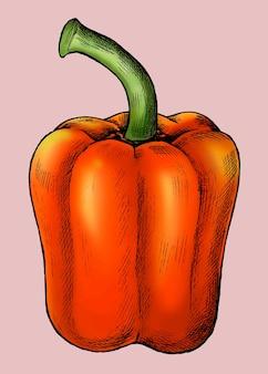Vetor de pimentão vermelho orgânico fresco Vetor Premium