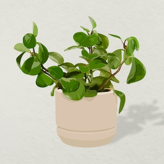 Vetor de planta de casa, decoração de interiores em vasos de plantas de borracha para bebês
