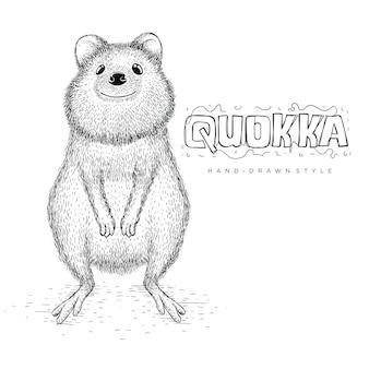 Vetor de quokka parece fofo. ilustração animal desenhada à mão