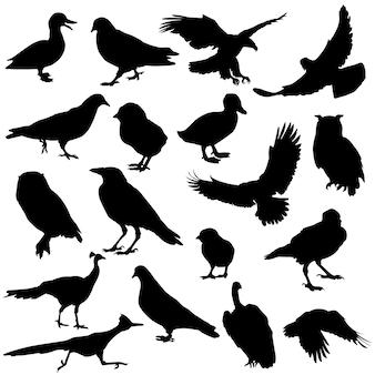 Vetor de silhueta animal de aves