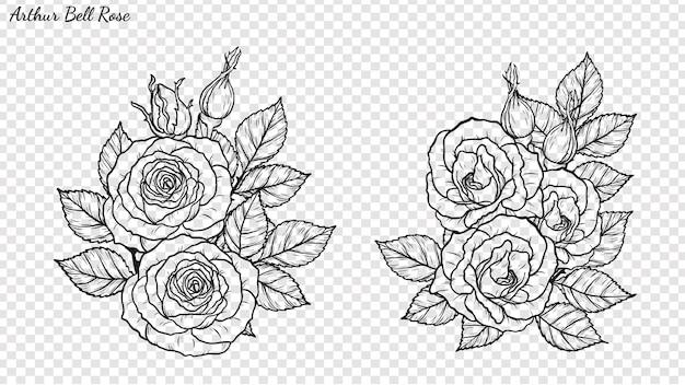 Vetor do ornamento de rosa à mão de desenho.