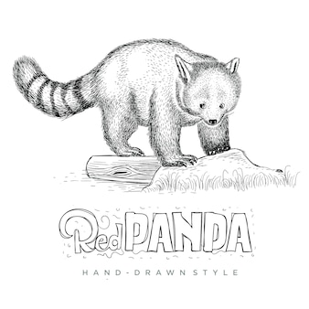 Vetor panda vermelho bonito. ilustração animal desenhada à mão