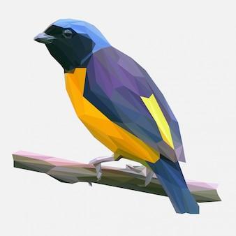 Vetor poligonal de pássaro tropical