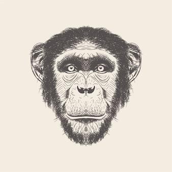 Vetor tirado mão da ilustração da cabeça do macaco.