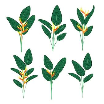 Vetor tropical da flor dos reginae do strelitzia. folhas verdes, planta de florescência de áfrica do sul igualmente conhecida como a flor do guindaste ou o pássaro de paraíso. projeto da selva, flores exóticas