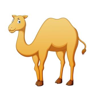 Vetorial, ilustração, de, caricatura, camelo