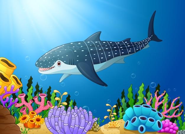 Vetorial, ilustração, de, caricatura, tubarão baleia, em, a, mar