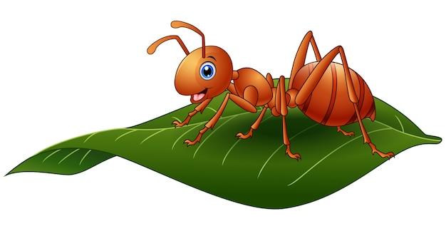 Vetorial, ilustração, de, formiga desenho animado, ligado, a, folha
