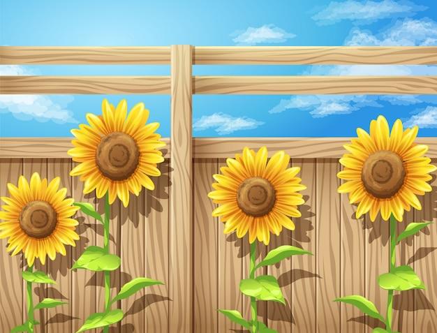 Vetorial, ilustração, de, girassol, dentro, cerca